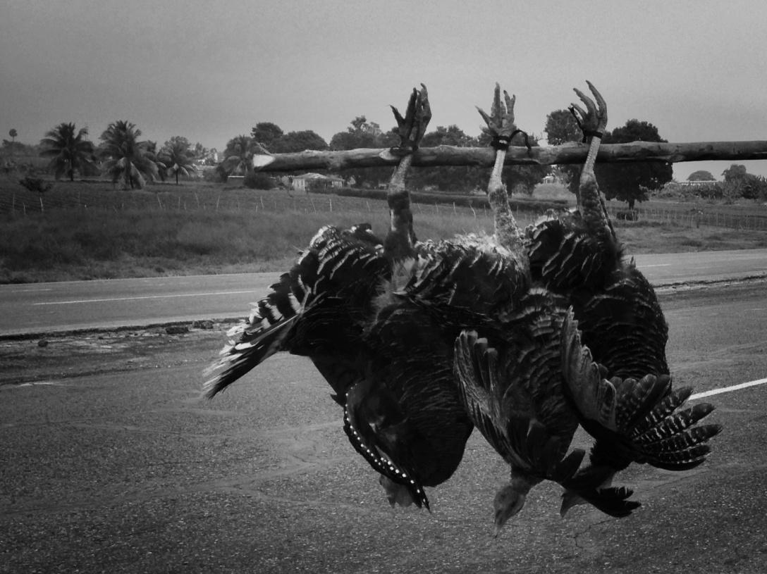 cuba-viaje-liana solis photographer-pavos