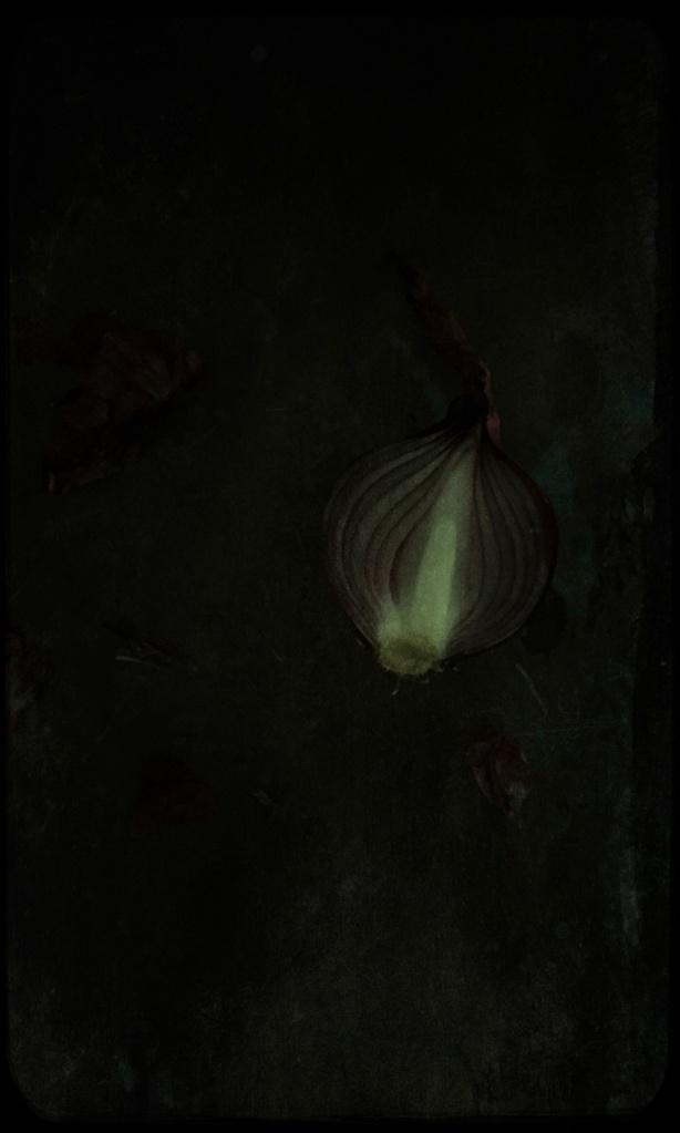 cebolla,still life, liana solis, milano, food photographer, fotografo gastronomico