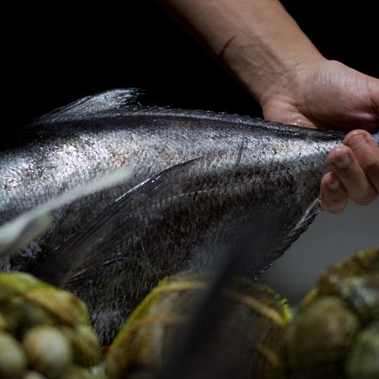 manos con pescado a Horta do obradoiro - @lianasolis